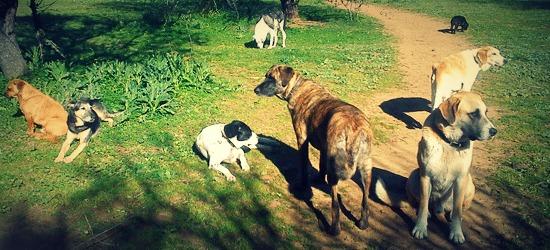 honden-maaike